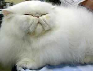 white cat_469155667