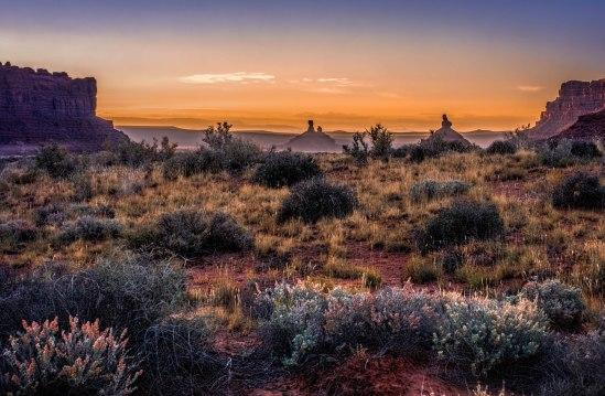 Desert Life at Dawn