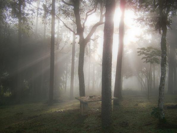 woods-375090_640