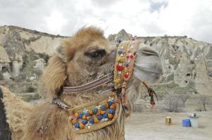 camel-161460_1280