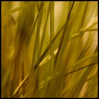 grass-66600_640
