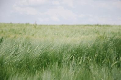 field-834375_1920