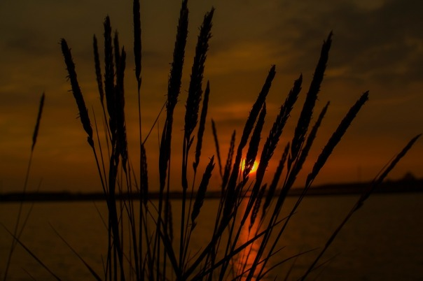 sun-1568954_1280