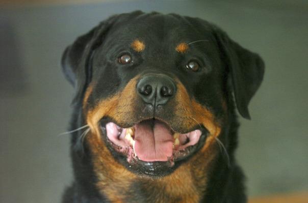 dog-3229190_1920