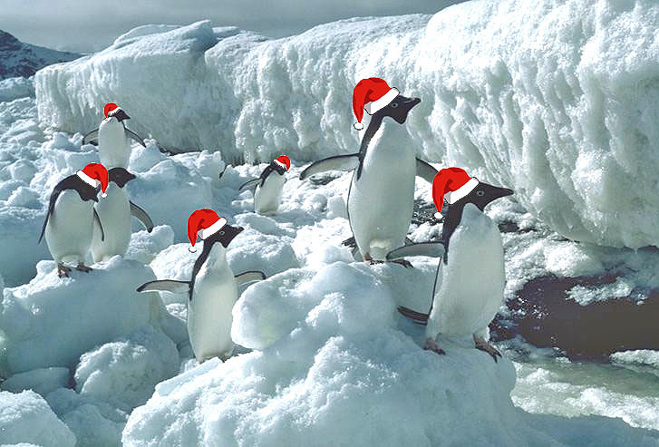 christmas_penguins